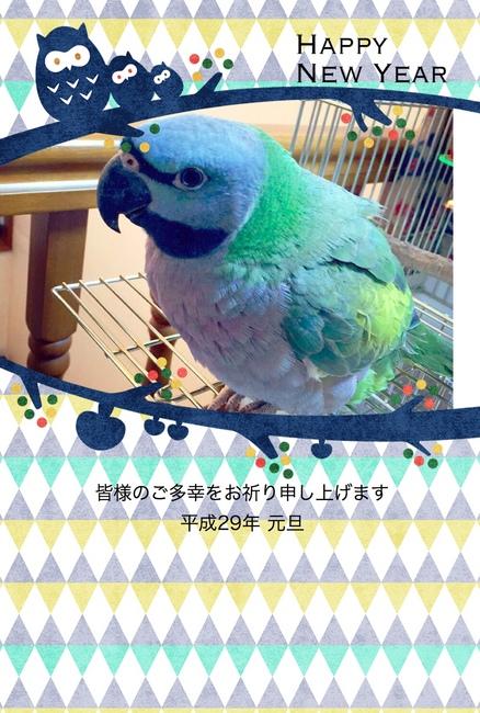 コロ年賀状2.jpg